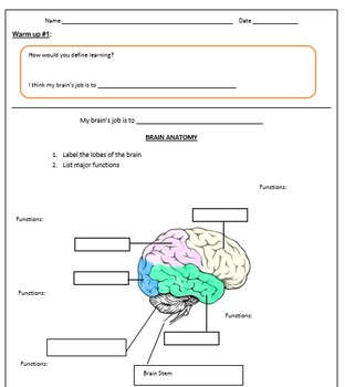 The Brain and it's functions Lesson Plan