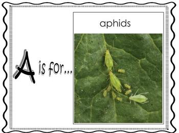 The Bug Alphabet - Promethean Board Flipchart