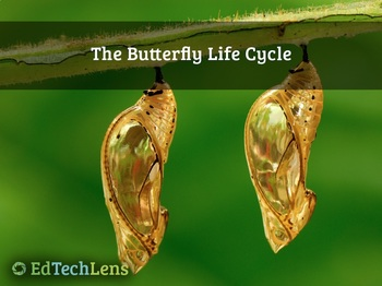 The Butterfly Life Cycle (PDF)
