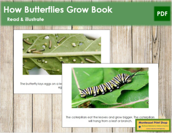 The Butterfly: Read and Illustrate