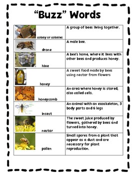The Buzz on Bees Close Reading PRINT & GO!