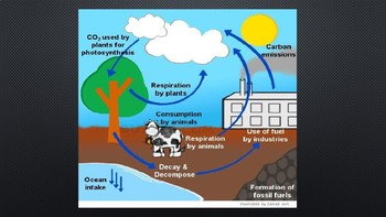 The Carbon Cycle-An Introduction