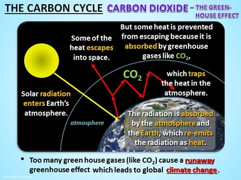 The Carbon Cycle - PowerPoint {Editable}