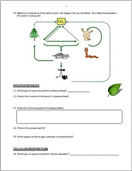 The Carbon Cycle - PowerPoint Worksheet {Editable} by Tangstar Science