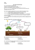 The Carbon Cycle - Worksheet | Distance Learning