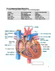 The Cardiovascular System Review