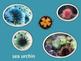 The Cay:  Habitat and Sea Life