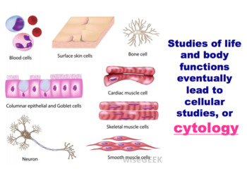 Cells - Animal Cell, Cell Structure & Cell Function (Editable)