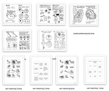 The Cell Coloring Sheet Bundle