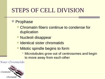 The Cell Cycle: Genetics