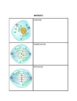 The Cell Cycle Notes Template