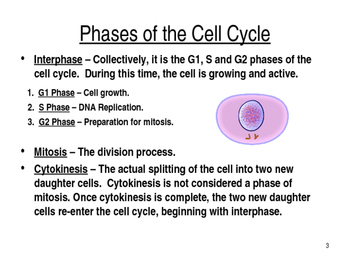 The Cell Cycle and Mitosis PPT by Biology Boutique | TpT