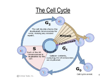 Ppt on cell division.