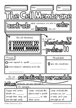 The Cell Membrane Middle School Biology Doodle Review