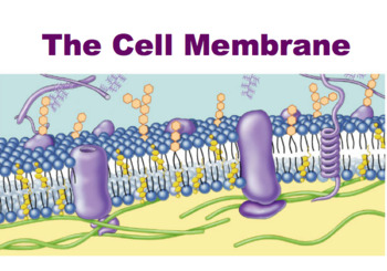 Cell Membrane - Phospholipid Bilayer - Active & Passive Transport (Editable)
