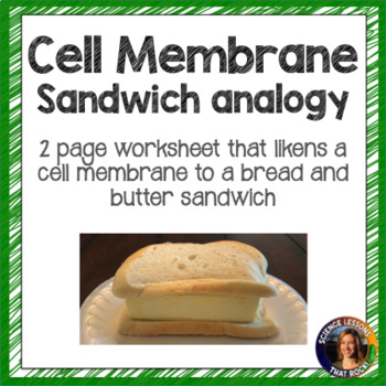 The Cell Membrane- Sandwich Analogy