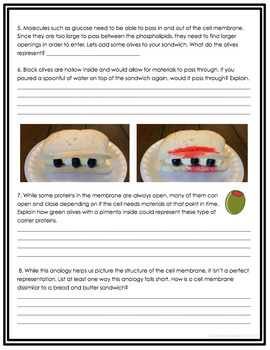 The Cell Membrane Analogy Worksheet