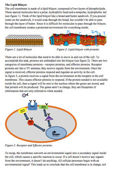 The Cell Membrane- The REAL Control Center of the Cell Close Reading