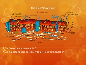 The Cell Membrane and Cell Transport