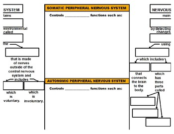 The Central Nervous Sys. vs. The Peripheral Nervous Sys. (YouTube Vodcast Notes)