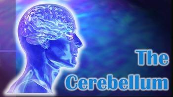 The Cerebellum - Brain Games (Powerpoint & 5 Games)