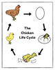 The Chicken Life Cycle FREEBIE