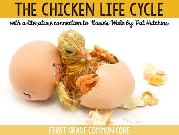 The Chicken Life Cycle with Rosie's Walk by Pat Hutchins