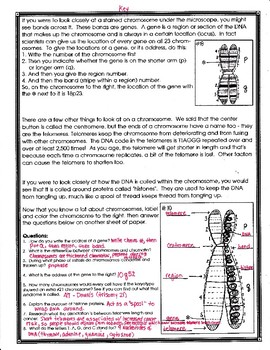 The Chromosome and the Gene Worksheet