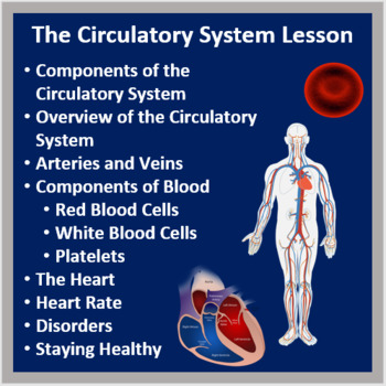 The Circulatory System - A Middle School Biology Lesson