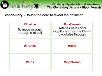 The Circulatory System - Blood Vessels - NOTEBOOK Gr. 3-8