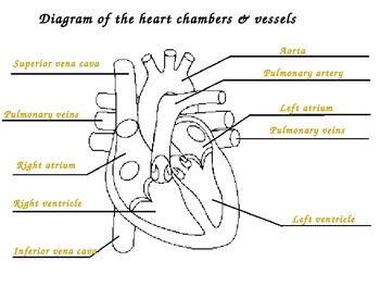 The Circulatory System Complete Unit Set!