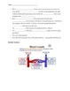 The Circulatory System Guided Notes