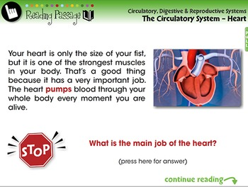 The Circulatory System - Heart - PC Gr. 3-8
