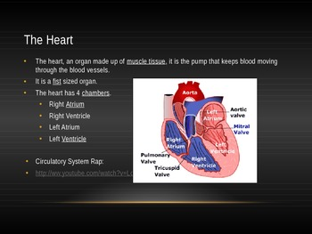 The Circulatory System Powerpoint