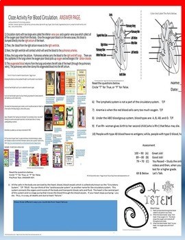 Circulatory System Quiz Life Science Biology SPED/ELD/OHI/Autism/VI