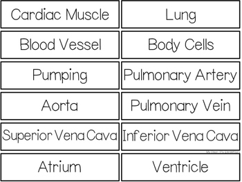 The Circulatory System {WORD WALL}