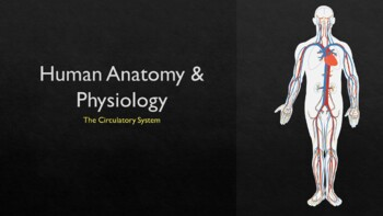 The Circulatory System the Complete Lesson Bundle (Powerpoint and Assessments)