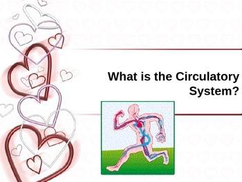 The Circulatory/Cardiovascular System