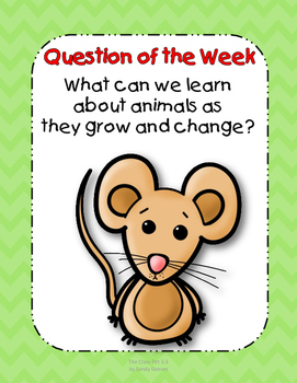 The Class Pet Resource Pack 1st Grade Reading Street Unit 3 Story 3