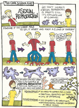 Asexual Reproduction Comic