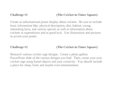 """The Cricket in Times Square"", Project Challenges for the Book"