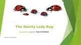 Insects - The Dainty Ladybug