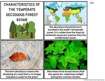 The Deciduous Forest Biome | Nature Curriculum in Cards