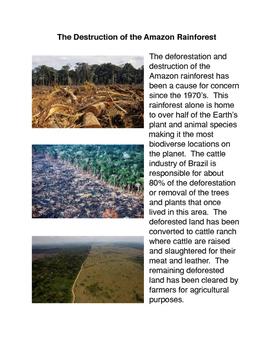 The Destruction of the Amazon Rainforest