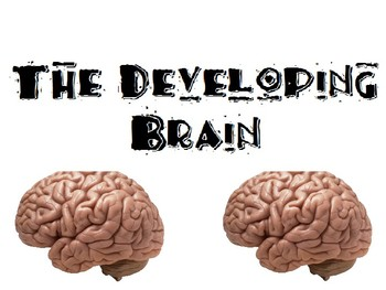 The Developing Baby Brain Powerpoint for FCS Child Development