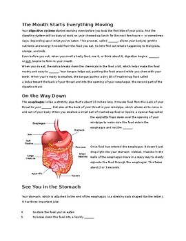 The Digestive System --  CLOZE Passage