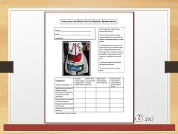 Digestive System Power Point - Includes Project Instructions and Rubric