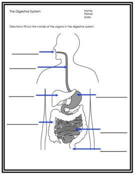 The Digestive System SMART notebook presentation