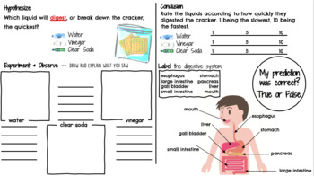 The Digestive System Science Notebook