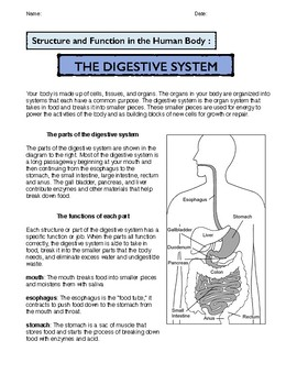 The Digestive System: Structure and Function